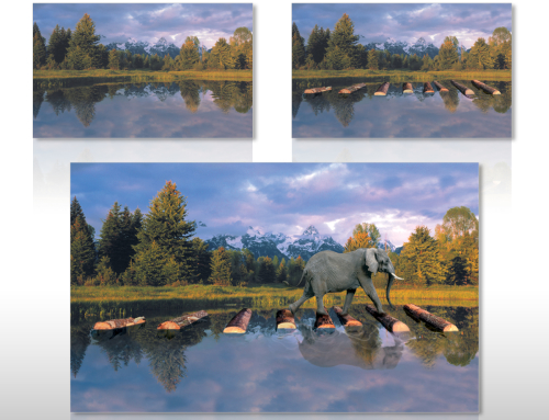 Levaquin Elephant